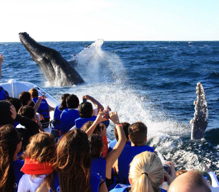 Avistamiento de Ballenas en Los Cabos - Gran Velas