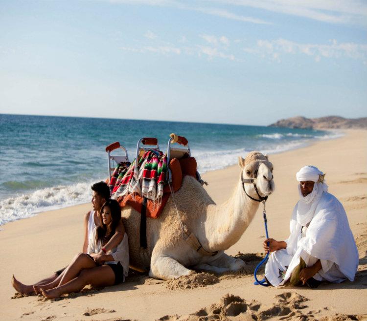 Safari Sobre Camellos, Los Cabos - Grand Velas Mexico