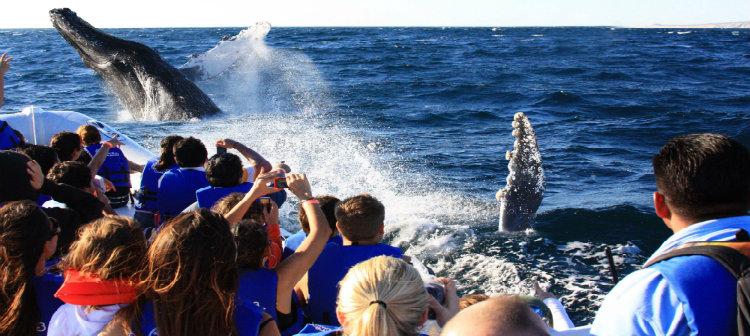 Avistamiento de Ballenas, Los Cabos - Grand Velas